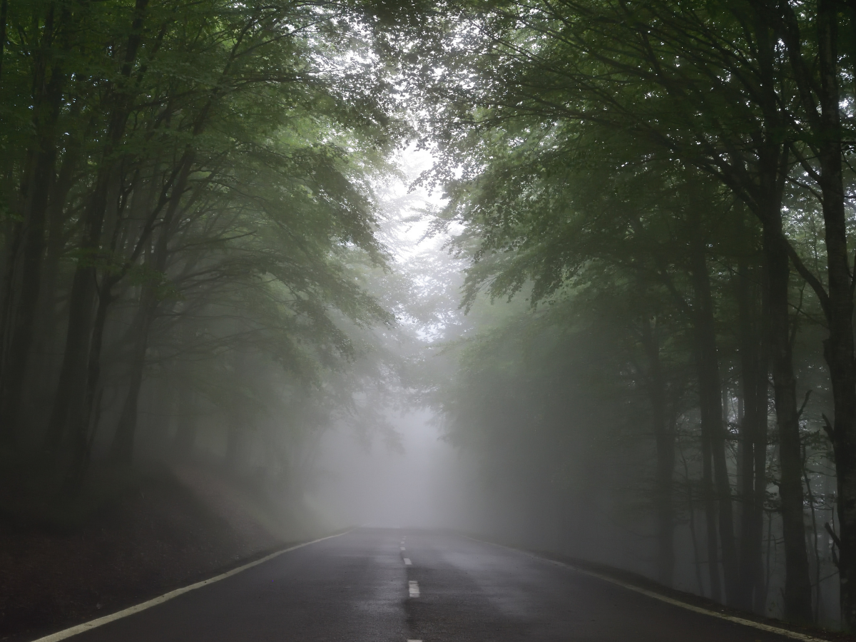 A foggy street in the woods to symbolize workplace anxiety