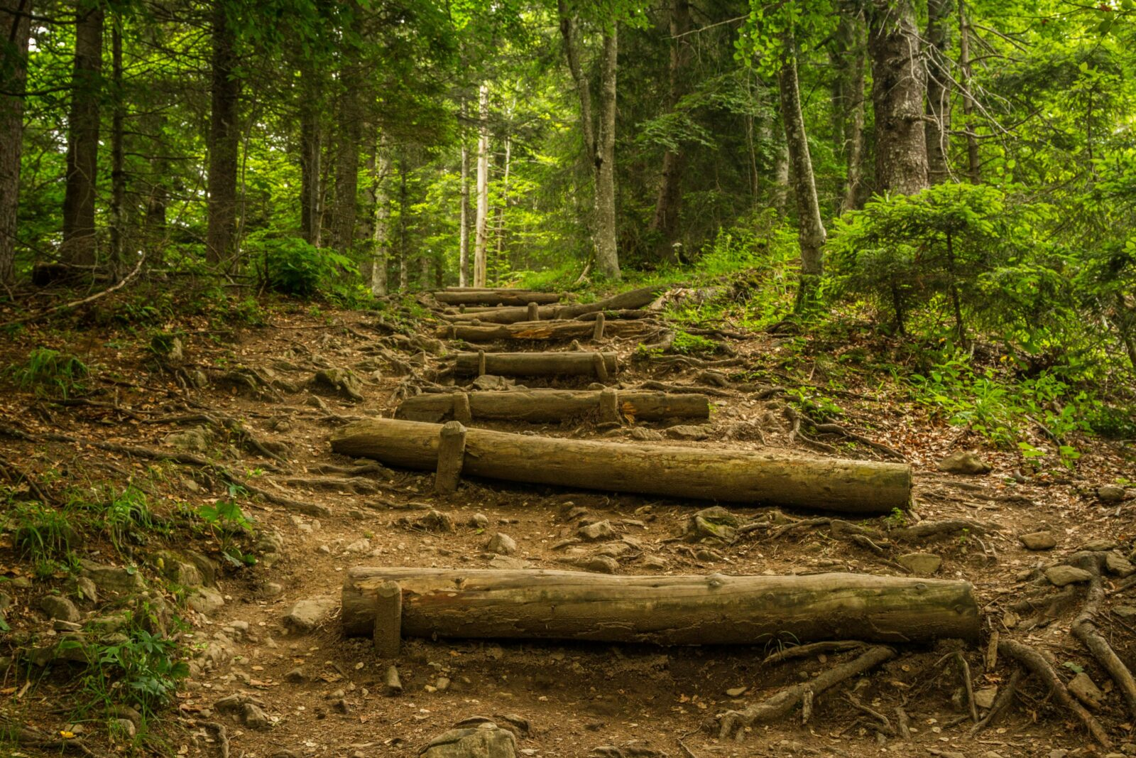 Steps going up into a forest