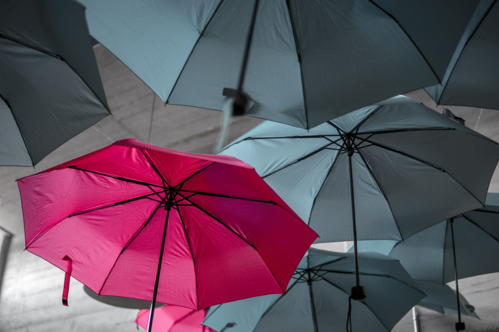 """A pink umbrella standing out against the black, """"normal umbrellas"""